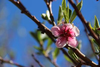 Le printemps est là !