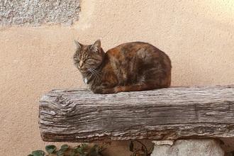 le chat profite du dernier rayon de soleil